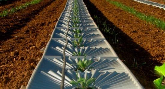 Israel: sa mạc có thể là đất canh tác nông nghiệp và thủy sản