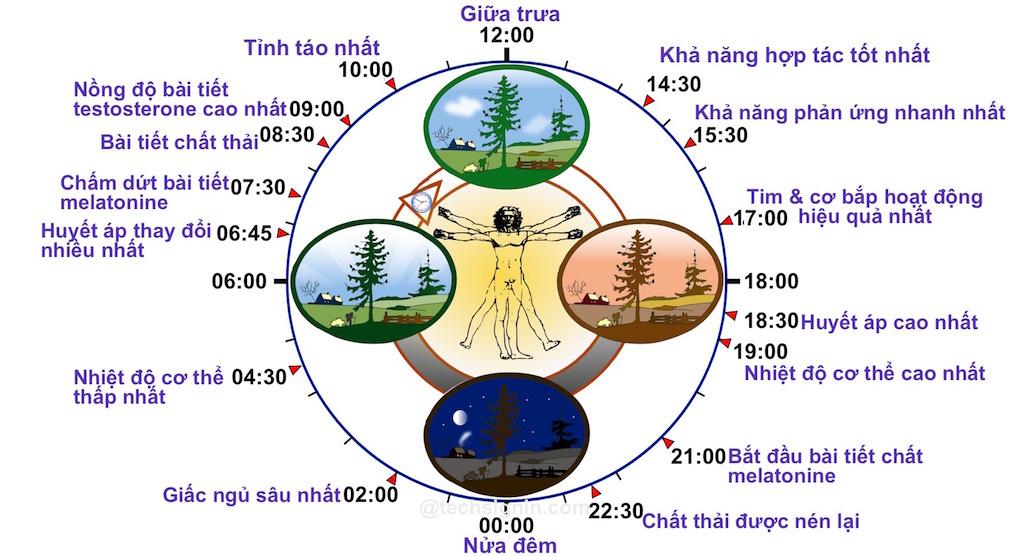 Hiểu hoạt động của cơ thể trong 24 giờ, bạn sẽ rút ra một chế độ ăn uống và ngủ nghỉ hợp lý