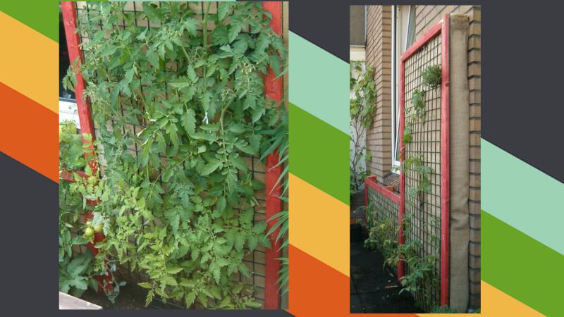 Những cách bố trí mảng xanh cho căn nhà có diện tích khiêm tốn