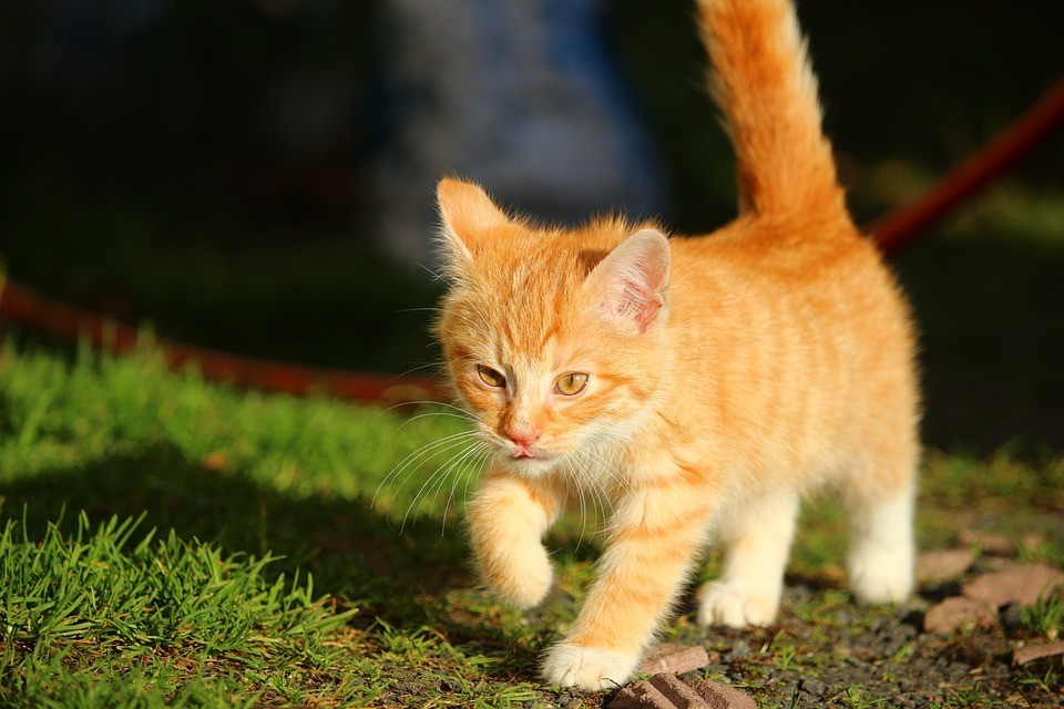 Herding cats: Picking images of cats out of YouTube videos was one of the first breakthrough demonstrations of deep learning, a subset of AI and machine learning.