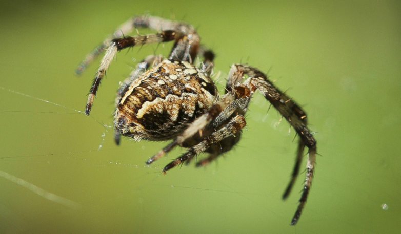Nghiên cứu: sợ nhện có thể là bản năng của con người