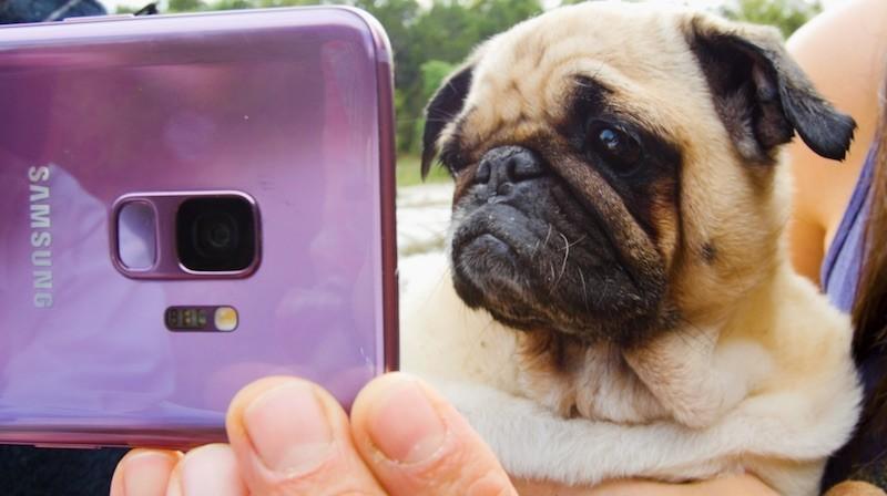 Samsung hợp tác cùng BuzzFeed và The Dodo, đăng tải các video quay chậm từ Galaxy S9 và S9+
