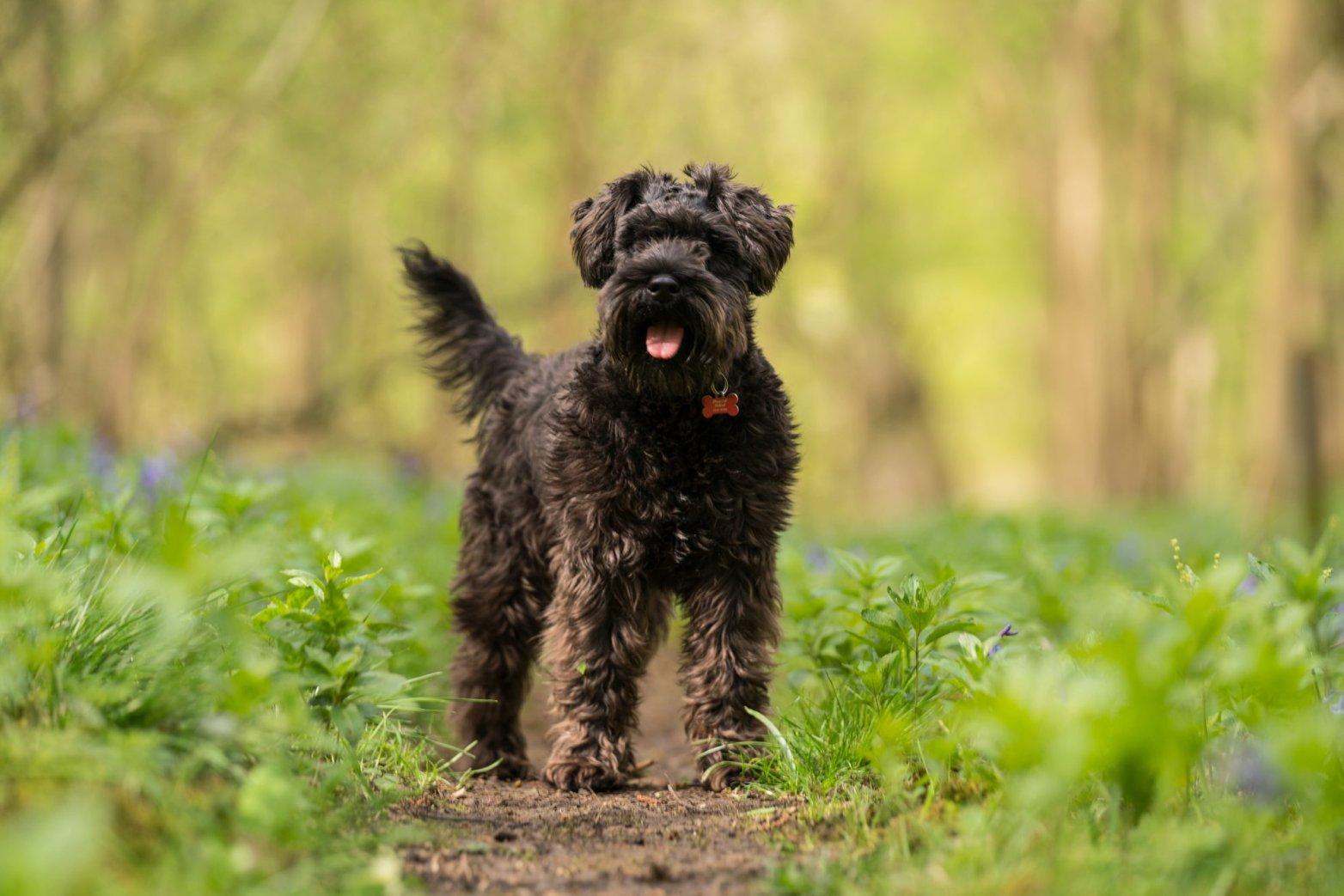 Nhân viên giao hàng cho Amazon trộm chó của khách