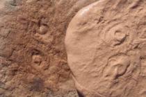Những loài sinh vật biển cổ đại mới được khám phá và lấy tên cựu Tổng thống Obama