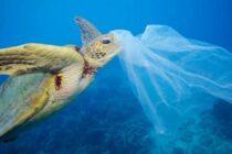 Hành tinh sống 2018: Hàng triệu động vật hoang dã đối mặt với nguy cơ tuyệt chủng