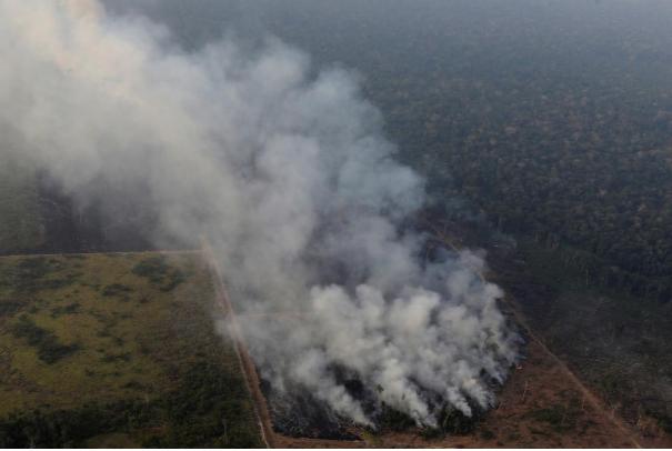 Cháy rừng Amazon ảnh hưởng đến môi trường như thế nào?