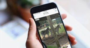 Tắt tính năng tự động phát video và ảnh Live trên iPhone, iPad và máy Mac