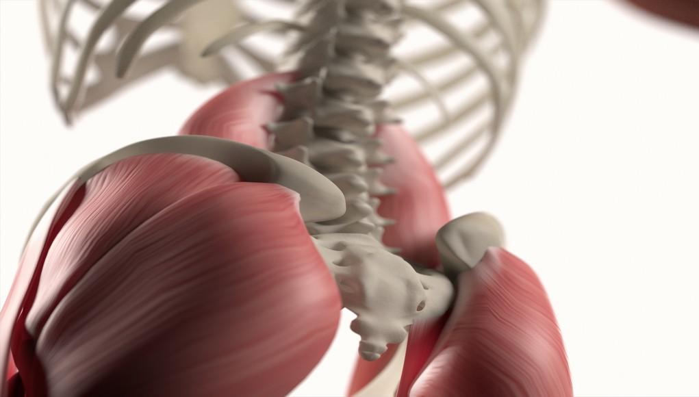 9 bộ phận cơ thể mà con người ngày nay không còn cần đến nữa