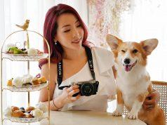 Sony công bố 'Ngày Pawgraphy 5.5' nối tiếp sáng kiến nhiếp ảnh và quay phim thú cưng